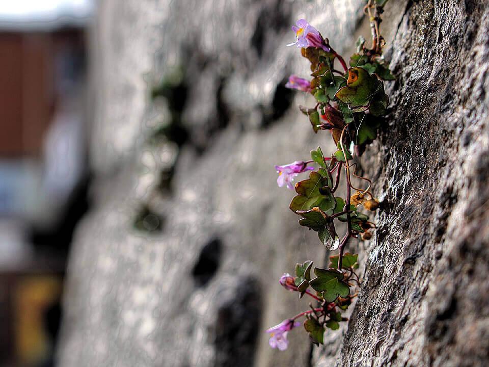Blumen am Elbufer bei Lauenburg